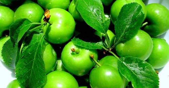 Hamilelikte Erik Aşermek Ve Yeşil Eriğin Gebelere Faydaları