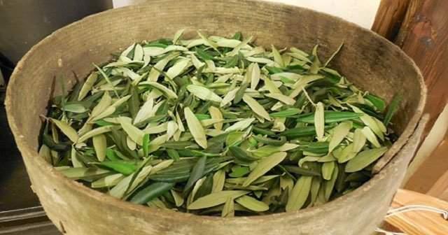 Zeytin Yaprağı Çayı Nasıl Yapılır Aç mı Tok mu İçilir Kaç Gün İçilmeli?