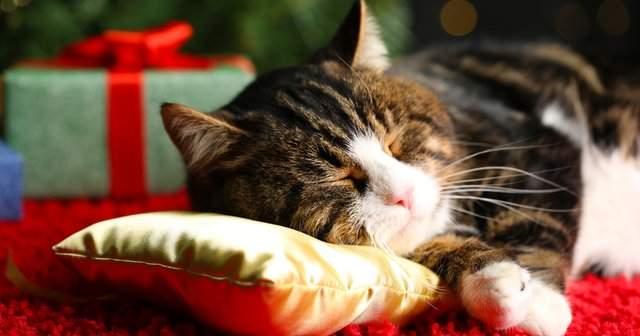 Kedi Tüyü Alerjisi Bitkisel Tedavisi Kedi Alerjisine Ne İyi Gelir