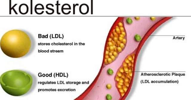 Kolesterol Düşürücü Ceviz Suyu Kolesterol Düşürücü Bitkiler Ceviz