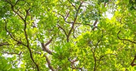 Ceviz Ağacının Zararları Ceviz Ağacının Altında Uyumak Zararlı mı
