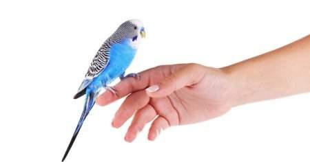 Muhabbet Kuşu Tüy Dökme Nedenleri Muhabbet Kuşları Ne Zaman Tüy Döker Nasıl Önlenir