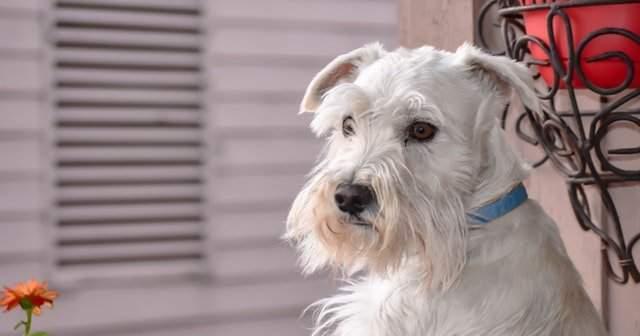 Köpek Çeşitleri Eğitilebilir Köpekler Nelerdir?