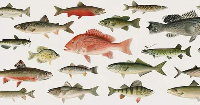 Yenilen Deniz Balık Çeşitleri Ve Özellikleri