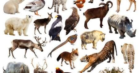 Dünyada Nesli Tükenmiş Hayvanlar Listesi 2020