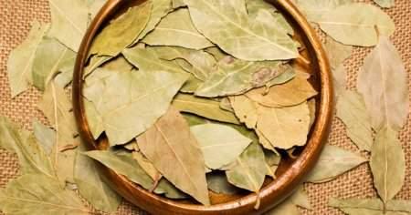 Defne Yaprağı Tütsüsünün Defne Yaprağı Yakmanın Muazzam Faydaları