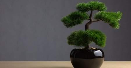 Bonsai Ağaç Bonsai Çiçek Nedir Nasıl Sulanır Bakılır?