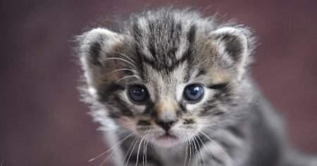 Kedim Kabız Oldu Kakasını Tuvaletini Yapamıyor Kabızlık Nasıl Geçer