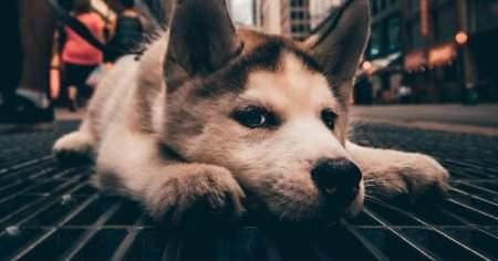 Köpeklerde Egzama İçin Evde Bitkisel Tedavi Yolları