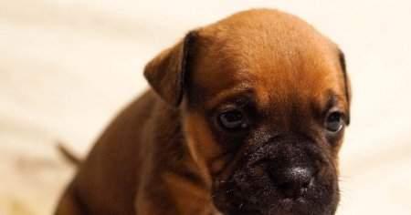 Yavru Köpek Kusmasının Nedenleri ve Tedavi Yöntemleri Nelerdir