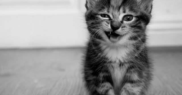 Yavru Kedim Sürekli Isırıyor Kediler Sahiplerini Neden Isırır