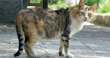 Sokak Kedisi Tırmaladı Ne Yapmalıyım Tetanoz Aşısı Vurdurmalı mı