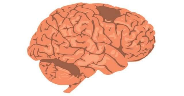Beyin Sapı Görevleri, Bölümleri Nelerden Oluşur