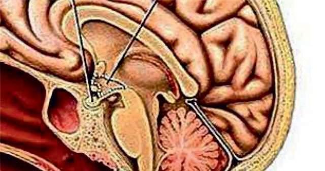 Hipotalamus Görevleri ve Özellikleri Ne Zarar Görürse Ne Olur