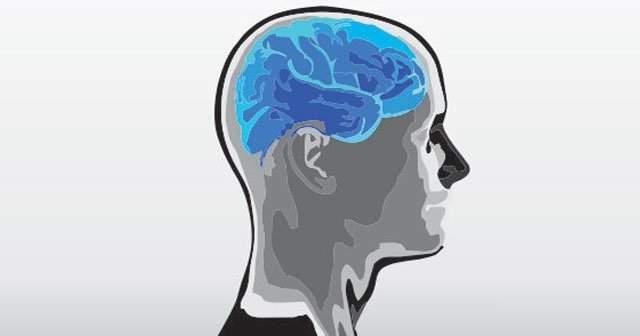 Uç Beyin Nedir Neleri Kontrol Eder