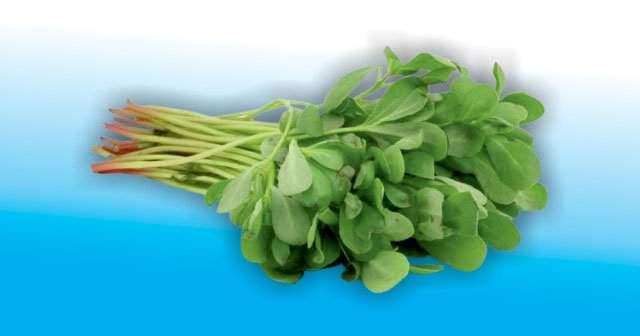 Semizotu Yemeği Kalori Değeri Ne Faydaları Neler
