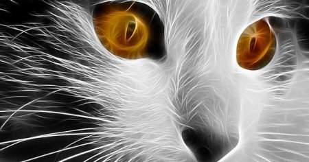 Kedim Çok, Aşırı Tüy Döküyor Ne Yapayım