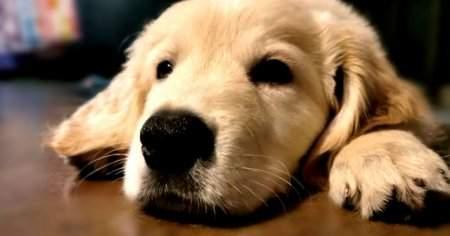 Köpeğim Titriyor Köpekler Uyurken Neden Titrer
