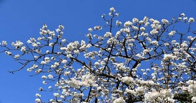 İlkbaharda Yetişten Meyve ve Sebzeler İlkbaharda Hangi Meyveler Yenir