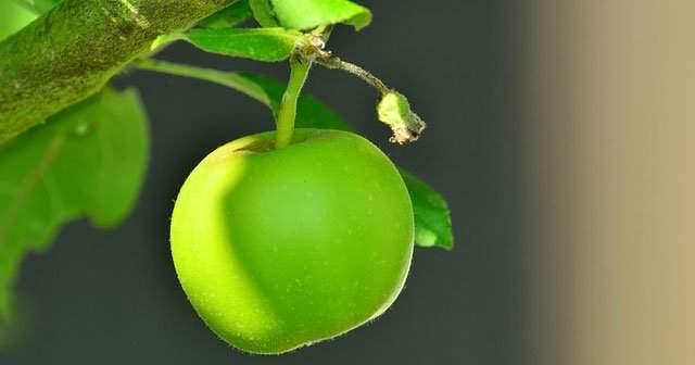 Yeşil Elma Diyeti İle 6 Günde 6 Günde Zayıflatan Diyet Listesi
