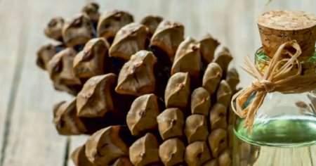 Çam Terebentin Yağı Saça Nasıl Uygulanır 2 Farklı Etkili Yöntem