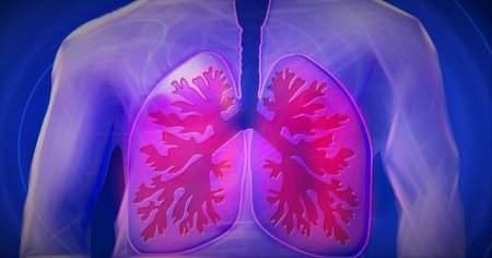 Ciğerde Leke Ne Anlama Gelir Nasıl Geçer Tedavisi Nasıldır?