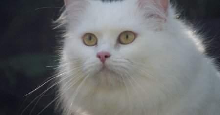 Kedi Piresi Nasıl Temizlenir Nasıl Geçer Sirke ve Diğer Doğal Yöntemler