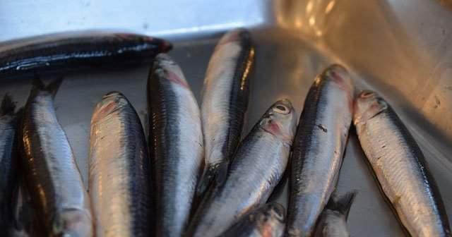 Bayat Balık Nasıl Anlaşılır Balığın Bayat Olduğunu Gösteren 12 İşaret