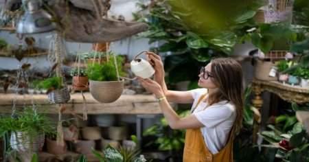 Evdeki havayı temizleyip eve oksijen yayan 7 bitki